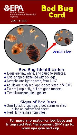 Bedbugs Mahoning County Board Of Health